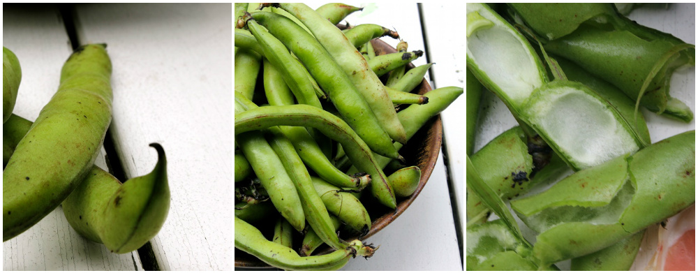 Broad-Beans